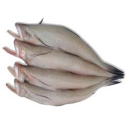Lote Fish (1kg)