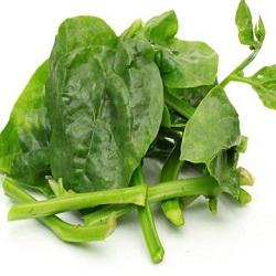 Basale Leaf (250g) -From Bisarga