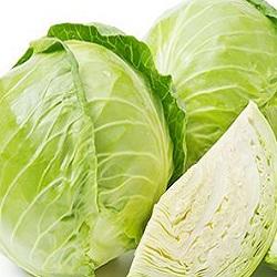 Cabbage From Bisarga(1pcs)