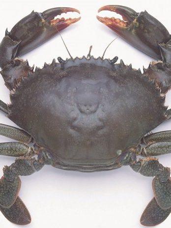 Crab Per/Kg
